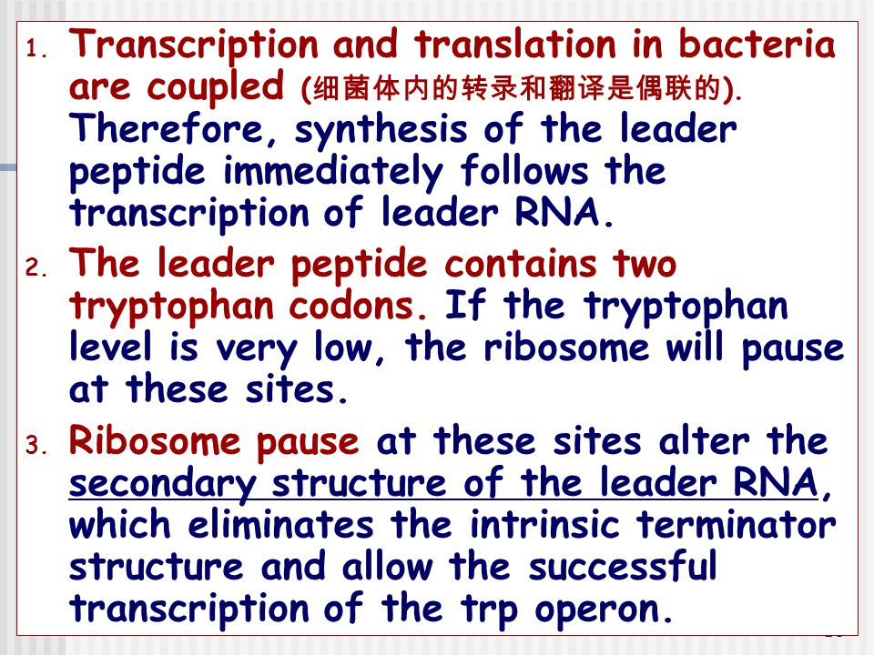 Transcription and translation in bacteria are coupled (细菌体内的转录和翻译是偶联的)