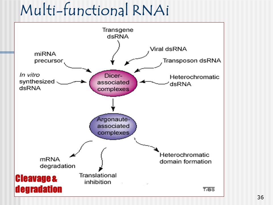 Multi-functional RNAi