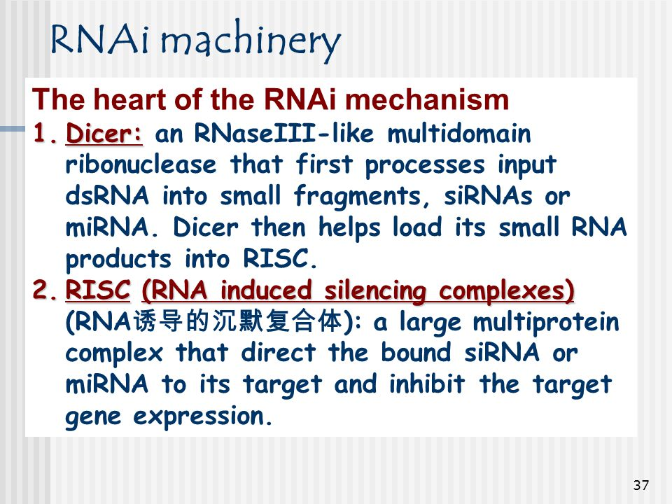 RNAi machinery The heart of the RNAi mechanism
