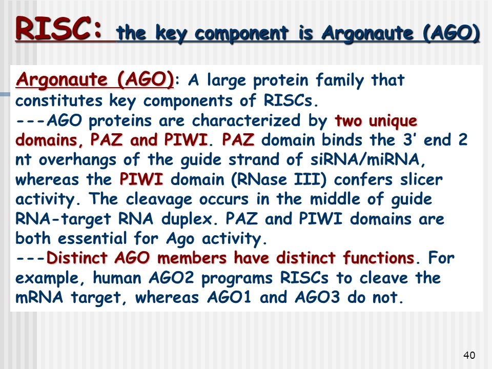 RISC: the key component is Argonaute (AGO)