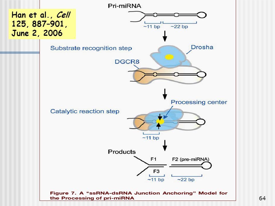Han et al., Cell 125, 887–901, June 2, 2006