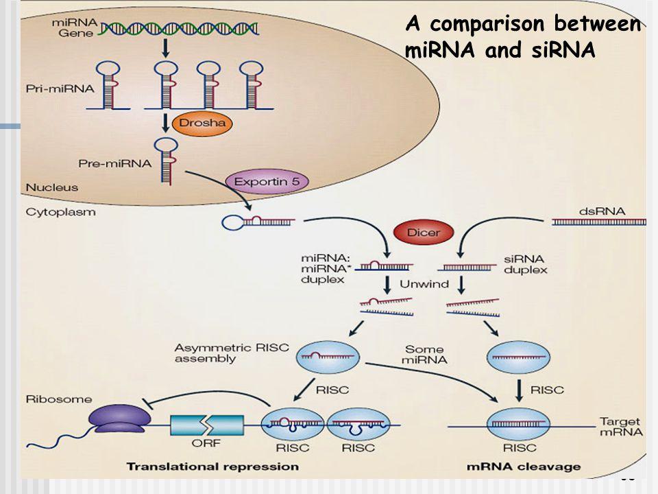 A comparison between miRNA and siRNA