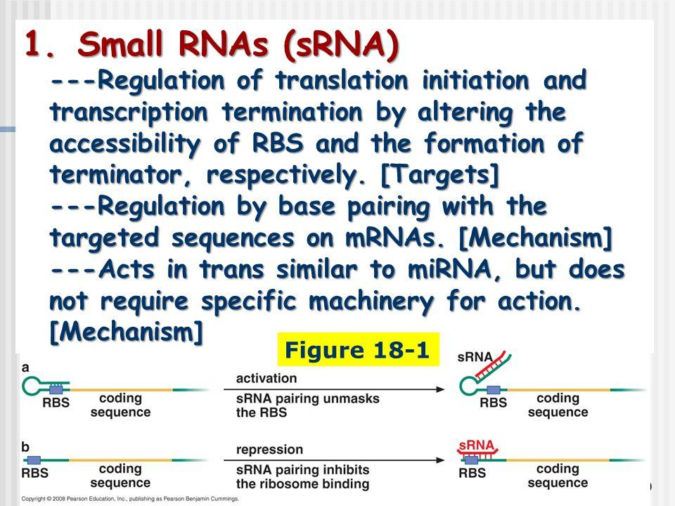 Small RNAs (sRNA)