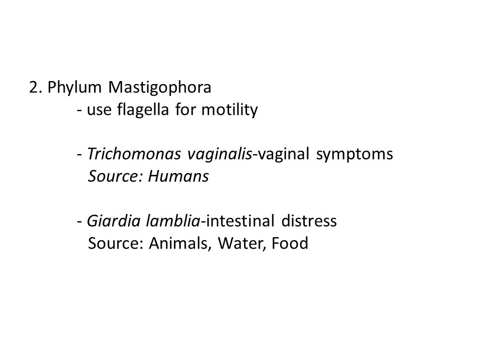 2. Phylum Mastigophora. - use flagella for motility