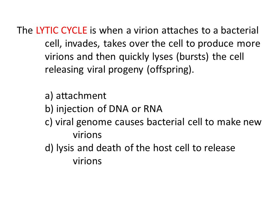 The LYTIC CYCLE is when a virion attaches to a bacterial