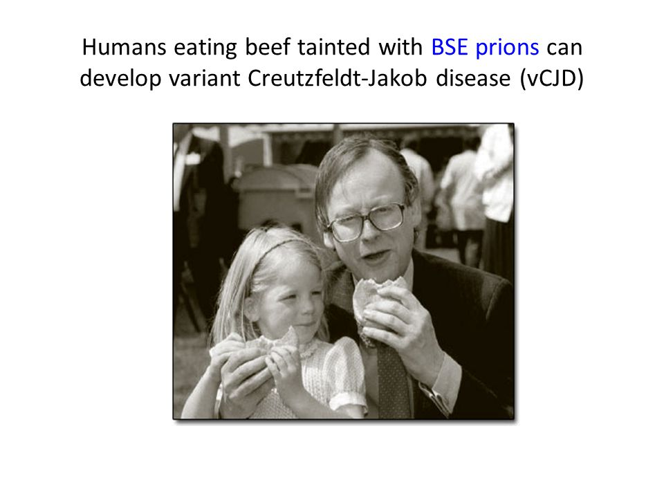 Humans eating beef tainted with BSE prions can develop variant Creutzfeldt-Jakob disease (vCJD)