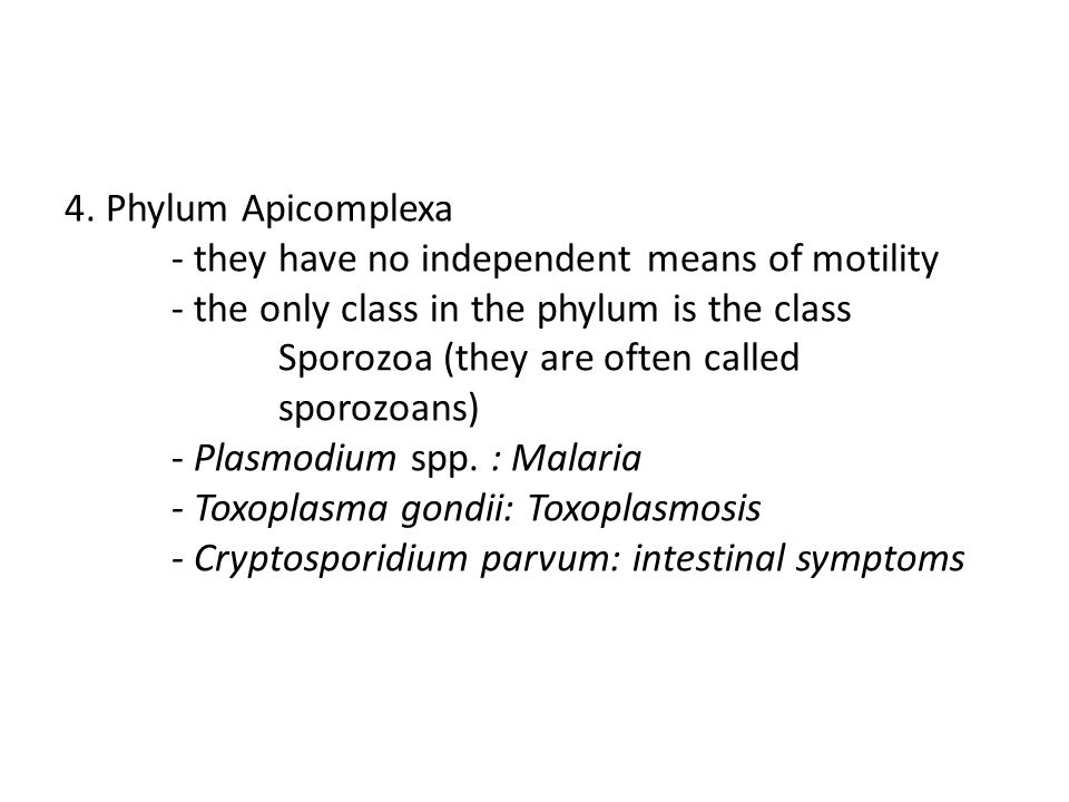 4. Phylum Apicomplexa. - they have no independent means of motility