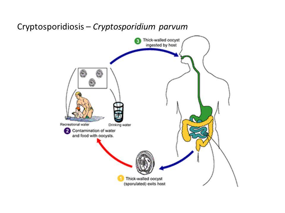 Cryptosporidiosis – Cryptosporidium parvum
