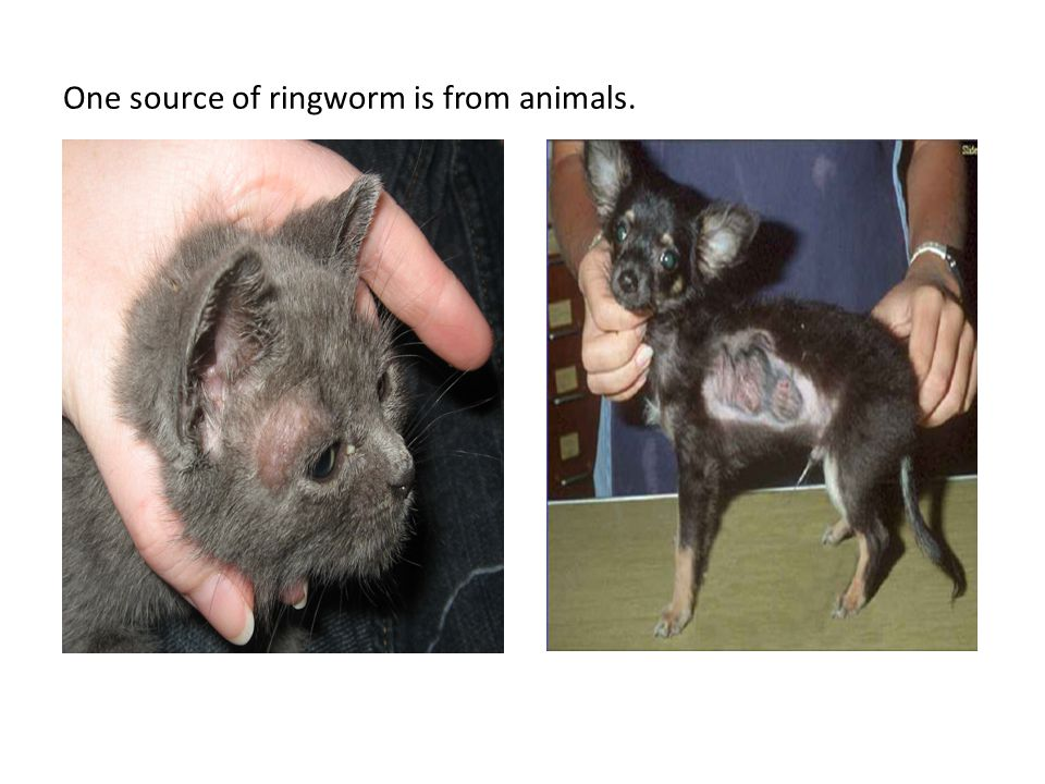 One source of ringworm is from animals.