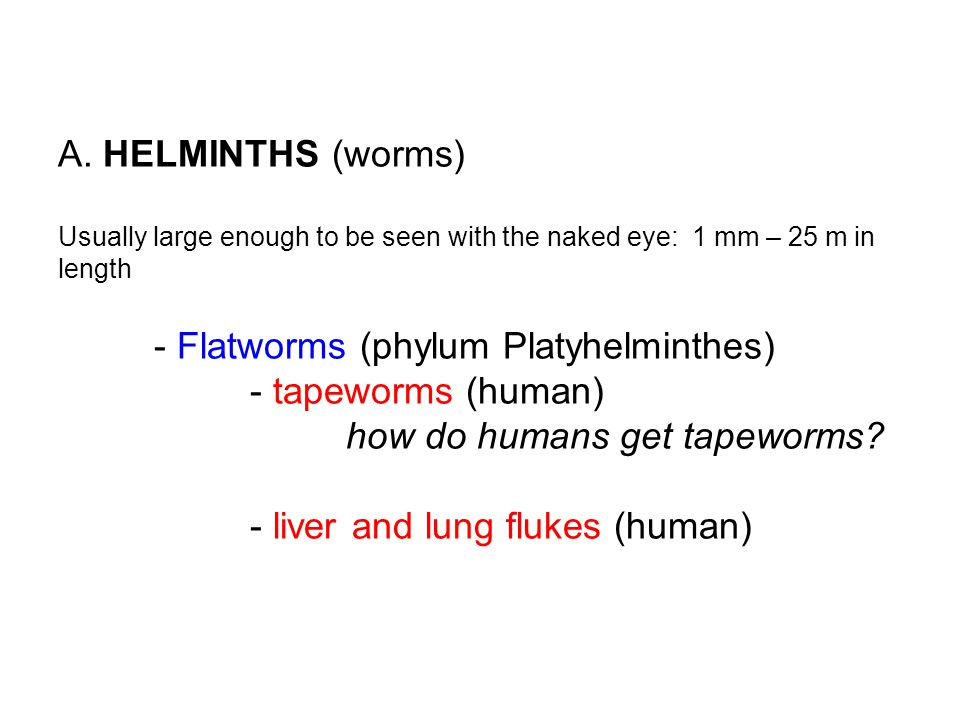A. HELMINTHS (worms) Usually large enough to be seen with the naked eye: 1 mm – 25 m in length - Flatworms (phylum Platyhelminthes) - tapeworms (human) how do humans get tapeworms - liver and lung flukes (human)
