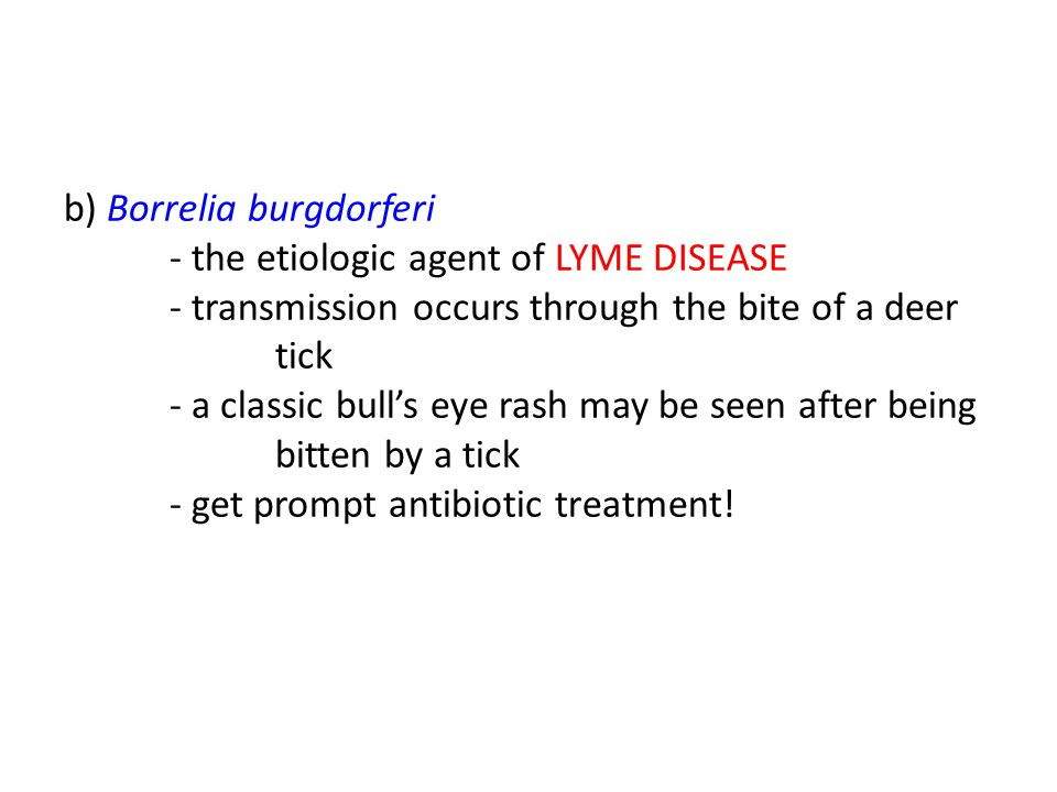 b) Borrelia burgdorferi. - the etiologic agent of LYME DISEASE