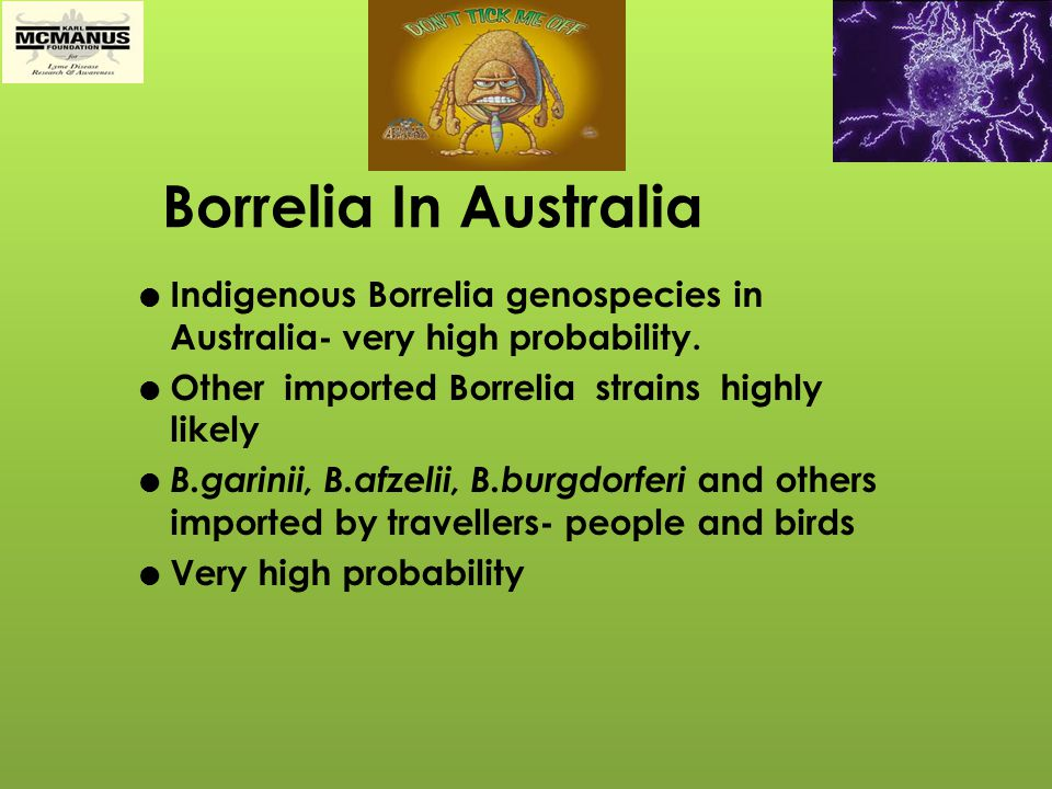 Borrelia In Australia Indigenous Borrelia genospecies in Australia- very high probability. Other imported Borrelia strains highly likely.