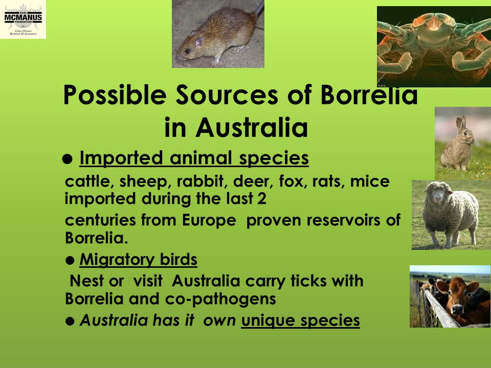 Possible Sources of Borrelia in Australia
