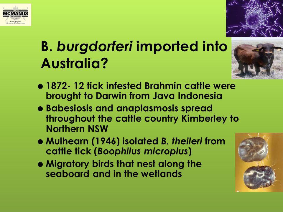 B. burgdorferi imported into Australia