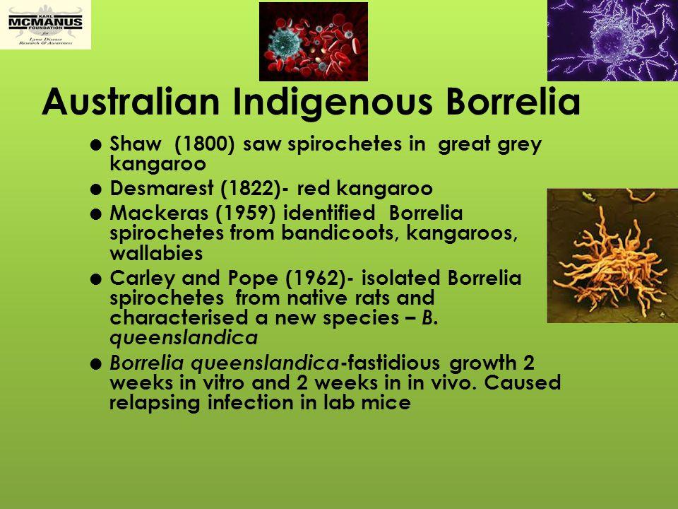 Australian Indigenous Borrelia