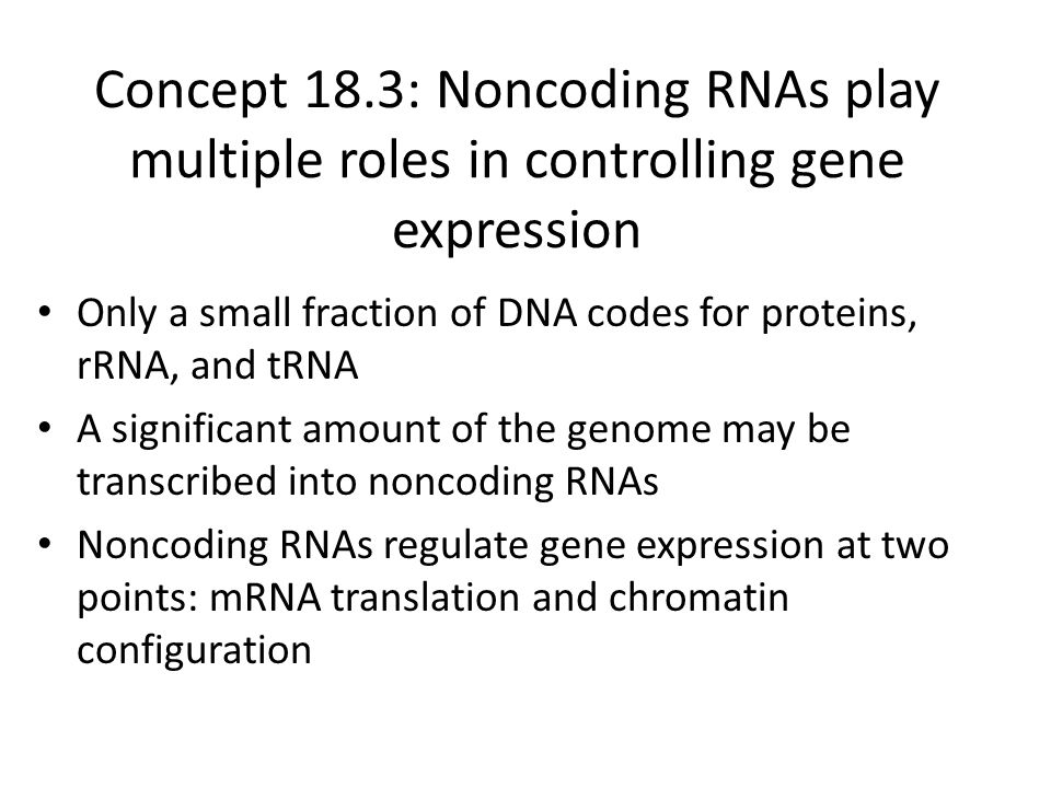 Concept 18.3: Noncoding RNAs play multiple roles in controlling gene expression