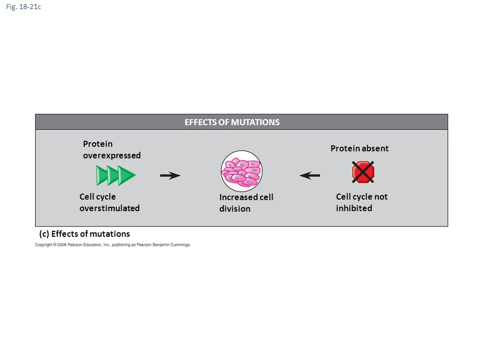 (c) Effects of mutations