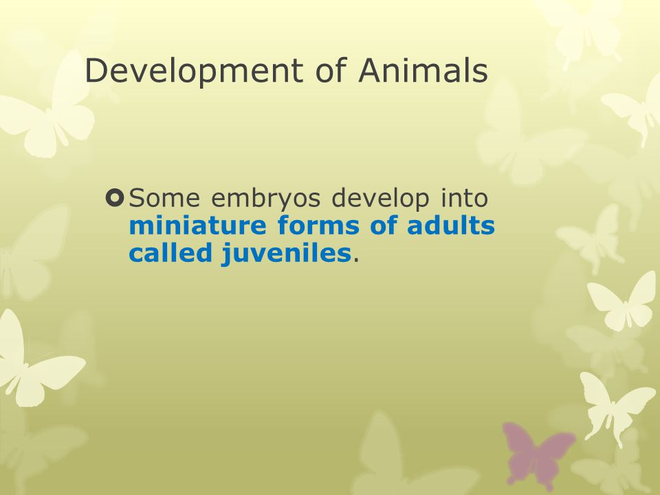 Development of Animals