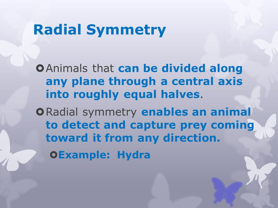 Radial Symmetry Animals that can be divided along any plane through a central axis into roughly equal halves.
