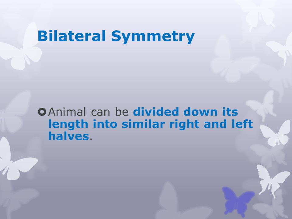 Bilateral Symmetry Animal can be divided down its length into similar right and left halves.
