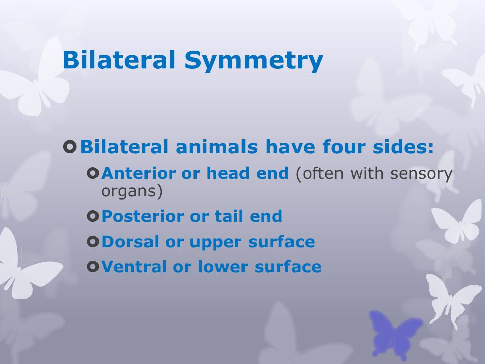 Bilateral Symmetry Bilateral animals have four sides: