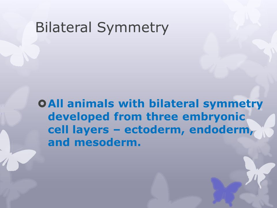 Bilateral Symmetry All animals with bilateral symmetry developed from three embryonic cell layers – ectoderm, endoderm, and mesoderm.