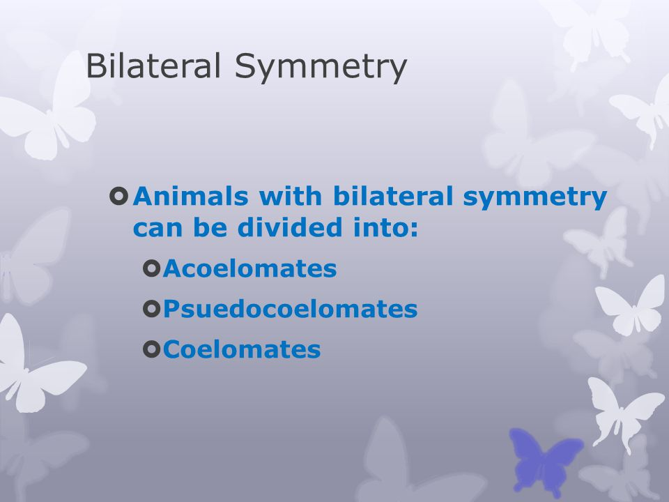 Bilateral Symmetry Animals with bilateral symmetry can be divided into: Acoelomates. Psuedocoelomates.
