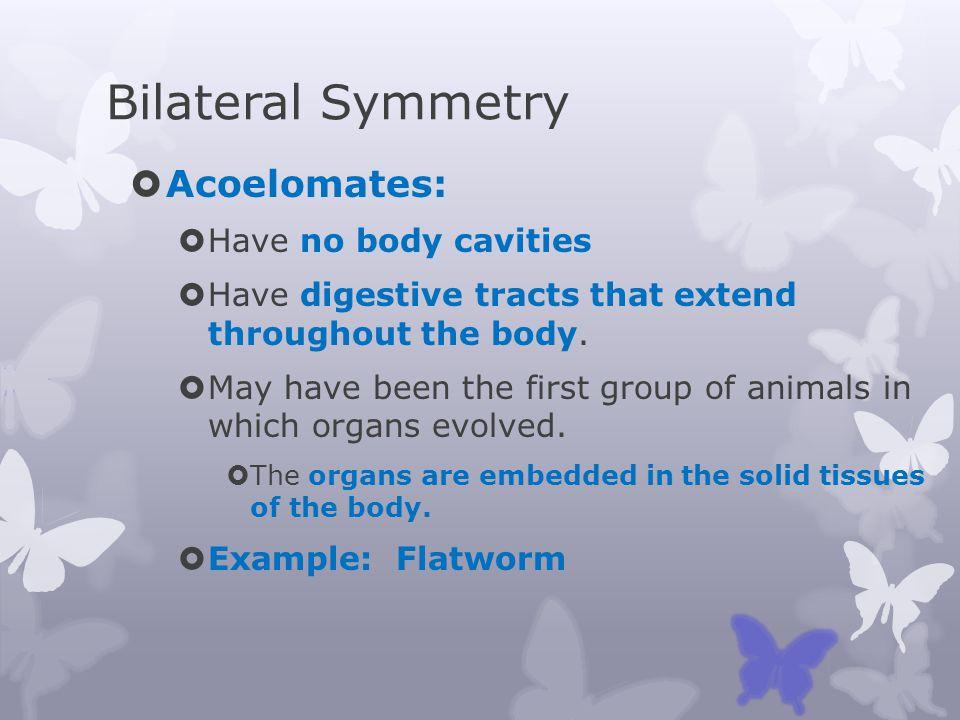 Bilateral Symmetry Acoelomates: Have no body cavities