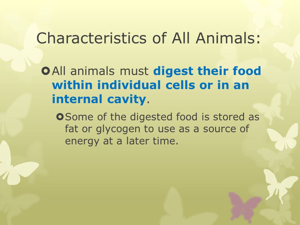 Characteristics of All Animals: