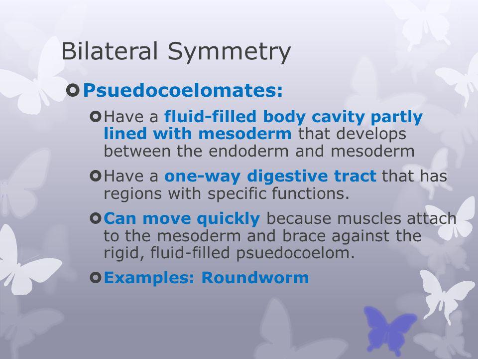 Bilateral Symmetry Psuedocoelomates: