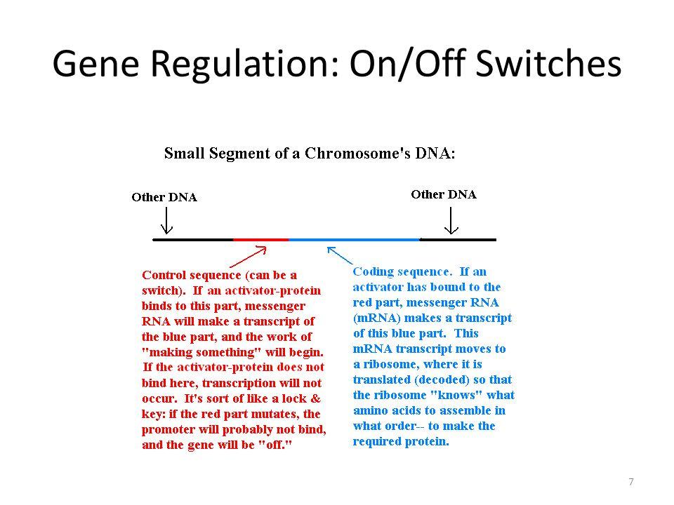 Gene Regulation: On/Off Switches