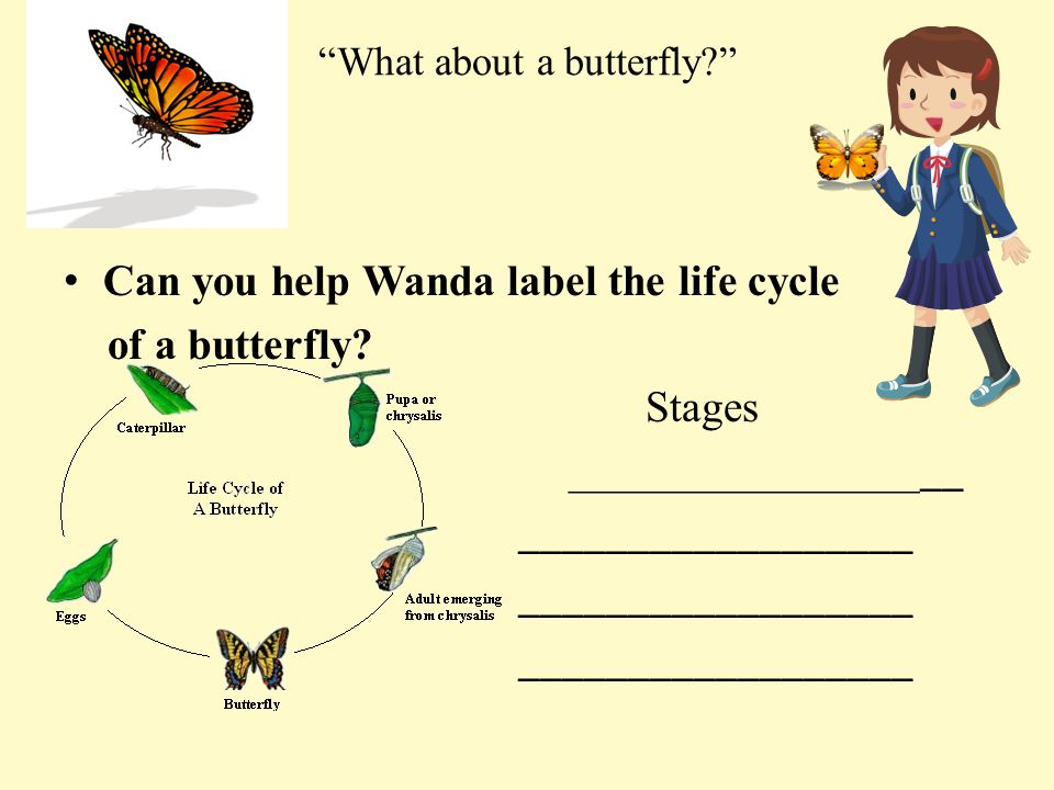 What about a butterfly