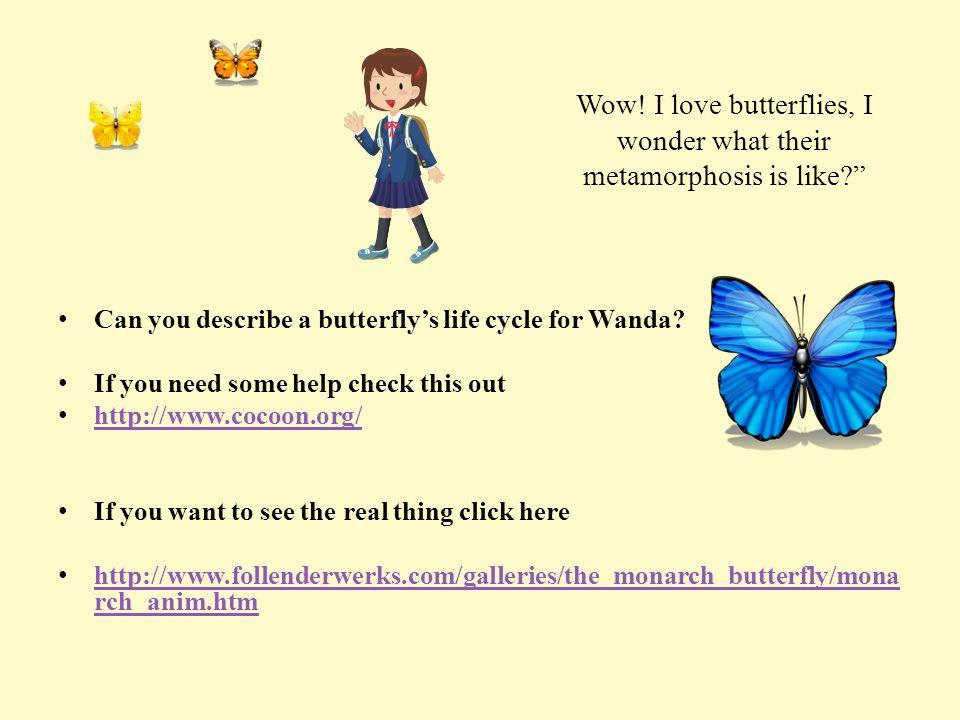 Wow! I love butterflies, I wonder what their metamorphosis is like