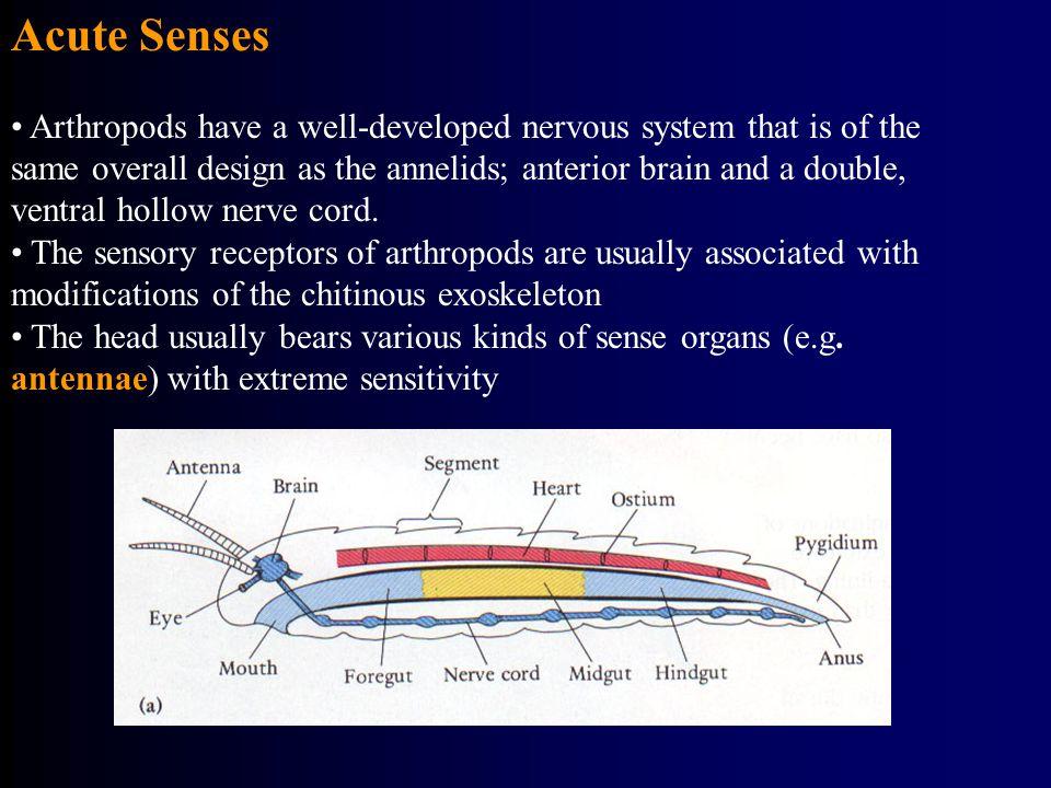 Acute Senses