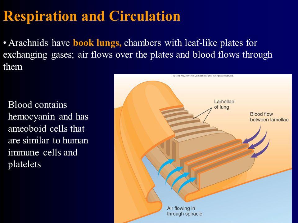 Respiration and Circulation