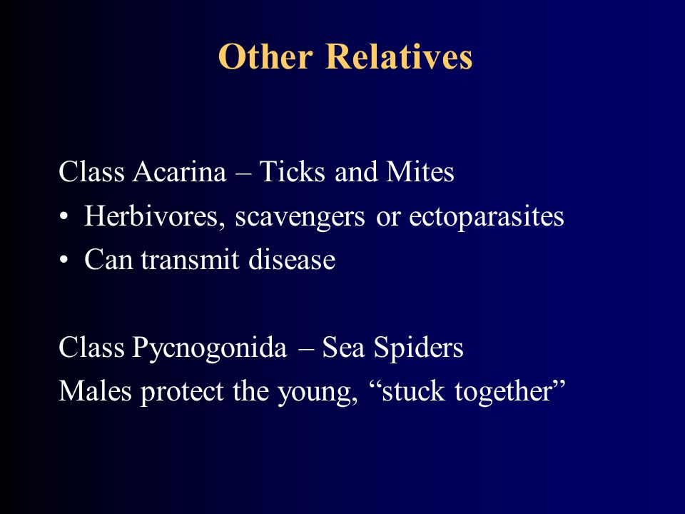Other Relatives Class Acarina – Ticks and Mites