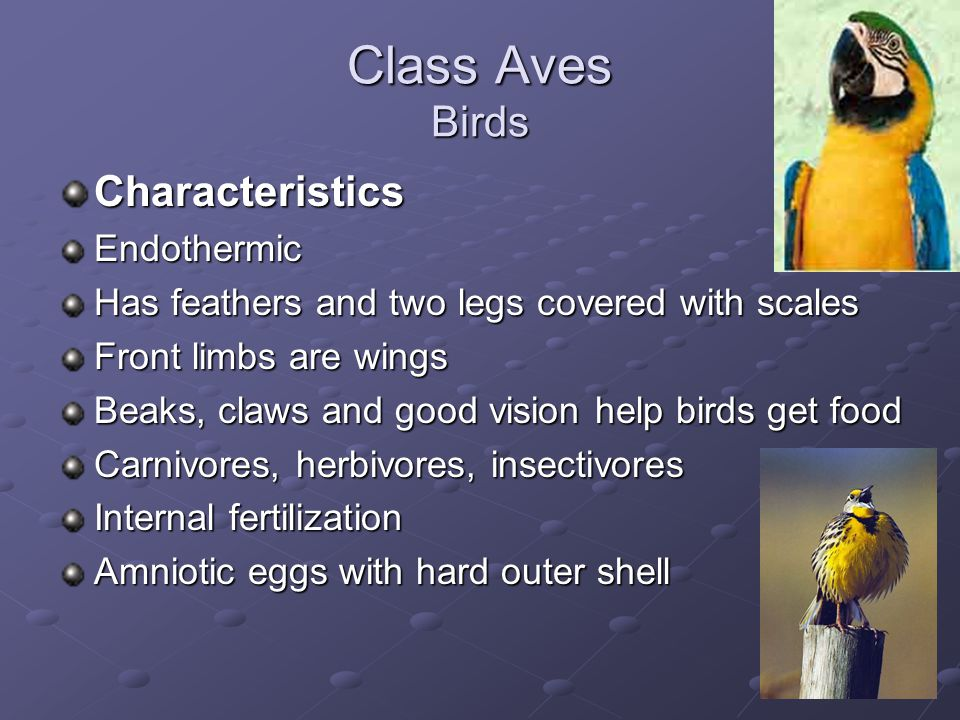 Class Aves Birds Characteristics Endothermic