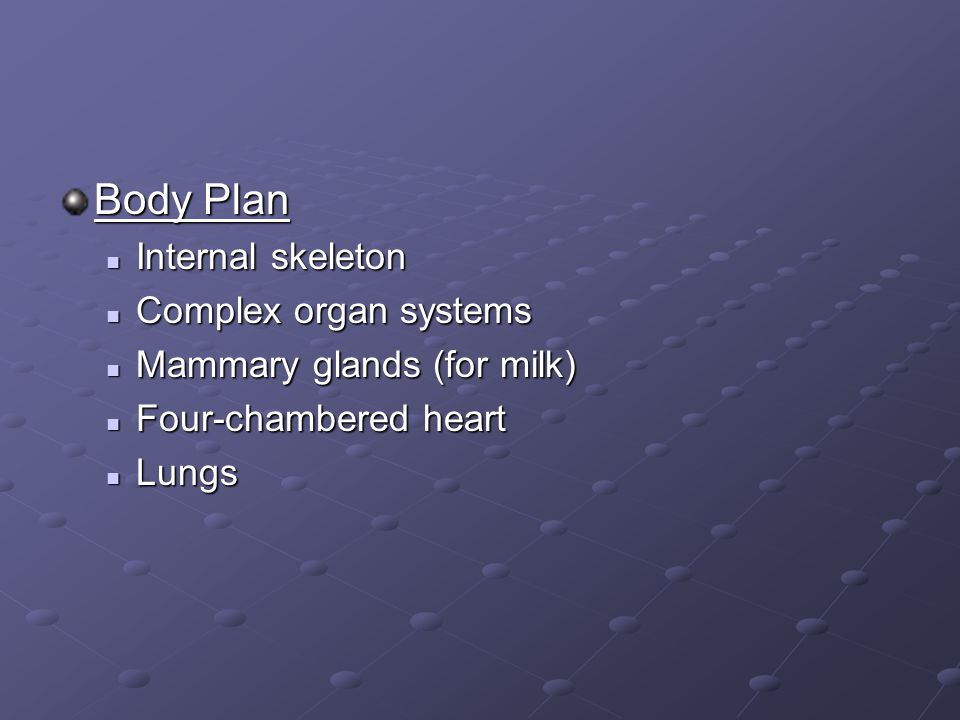 Body Plan Internal skeleton Complex organ systems