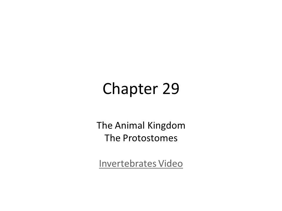The Animal Kingdom The Protostomes Invertebrates Video