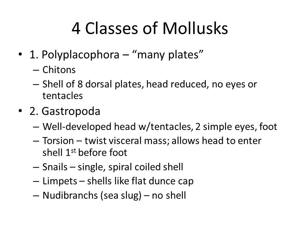 4 Classes of Mollusks 1. Polyplacophora – many plates 2. Gastropoda