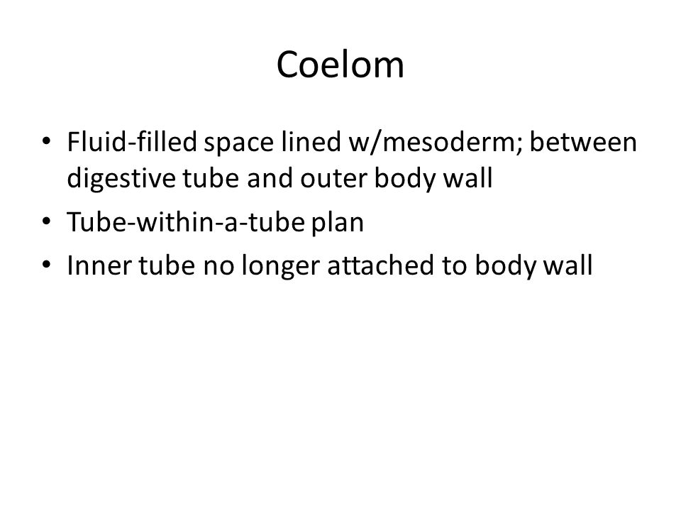 Coelom Fluid-filled space lined w/mesoderm; between digestive tube and outer body wall. Tube-within-a-tube plan.