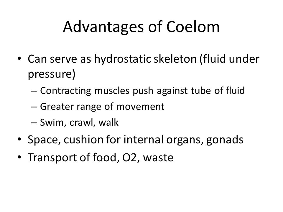 Advantages of Coelom Can serve as hydrostatic skeleton (fluid under pressure) Contracting muscles push against tube of fluid.
