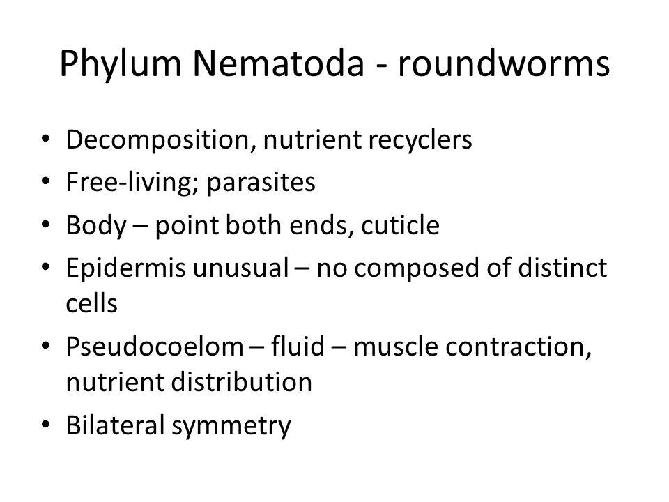 Phylum Nematoda - roundworms