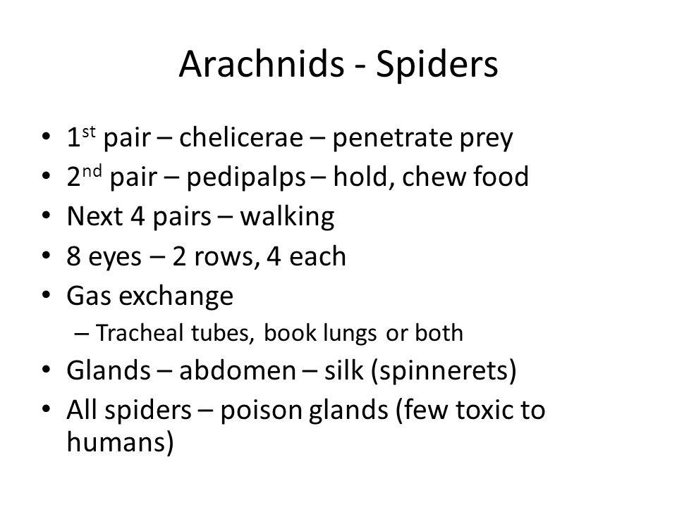 Arachnids - Spiders 1st pair – chelicerae – penetrate prey