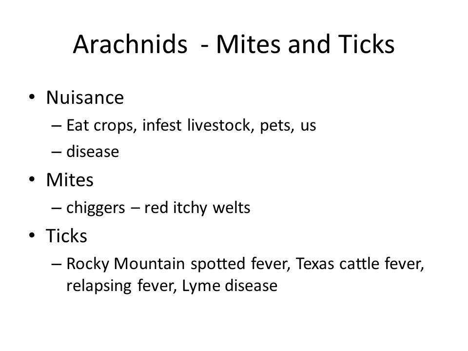 Arachnids - Mites and Ticks