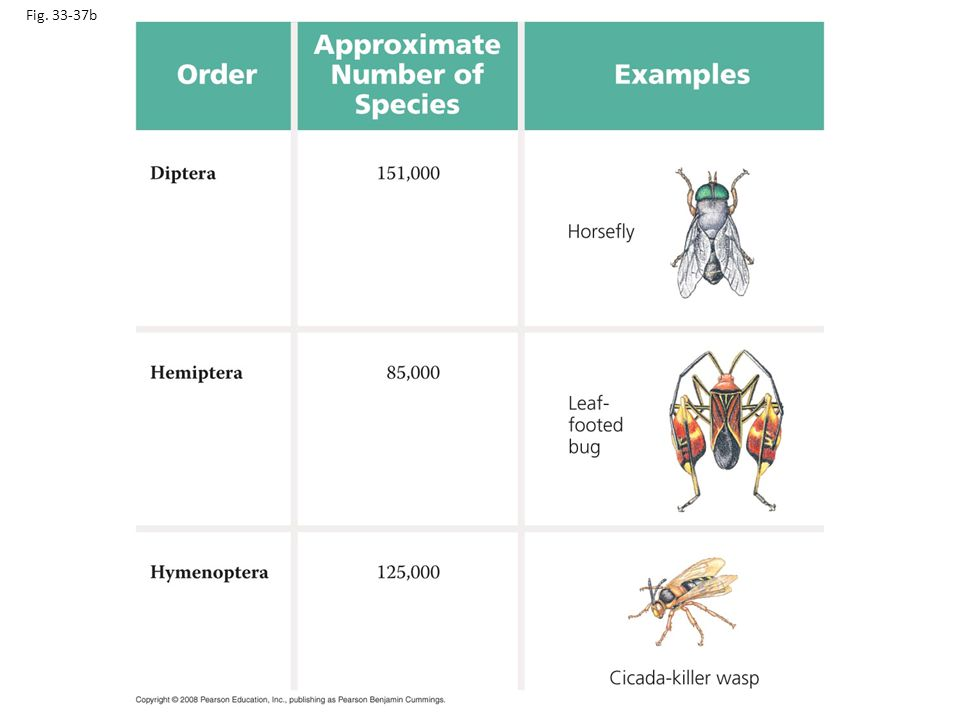 Fig. 33-37b Figure 33.37 Insect diversity