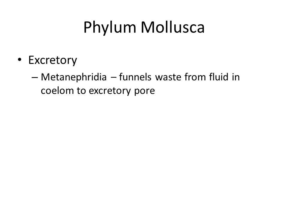 Phylum Mollusca Excretory