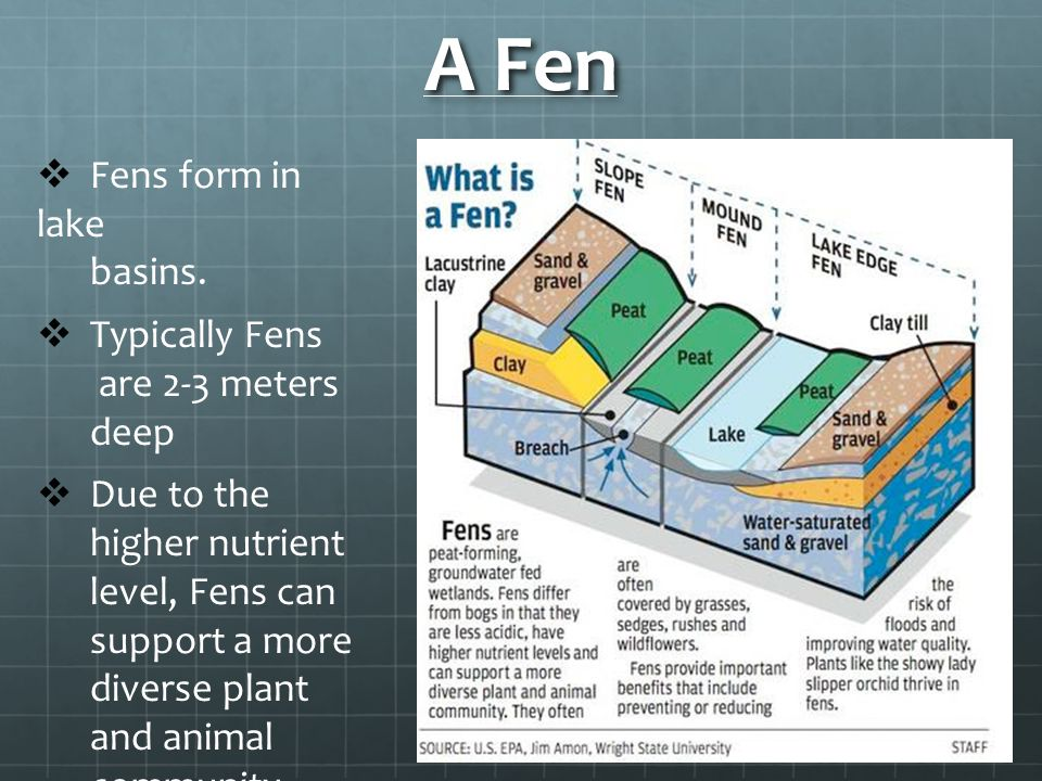 A Fen Fens form in lake basins. Typically Fens are 2-3 meters deep