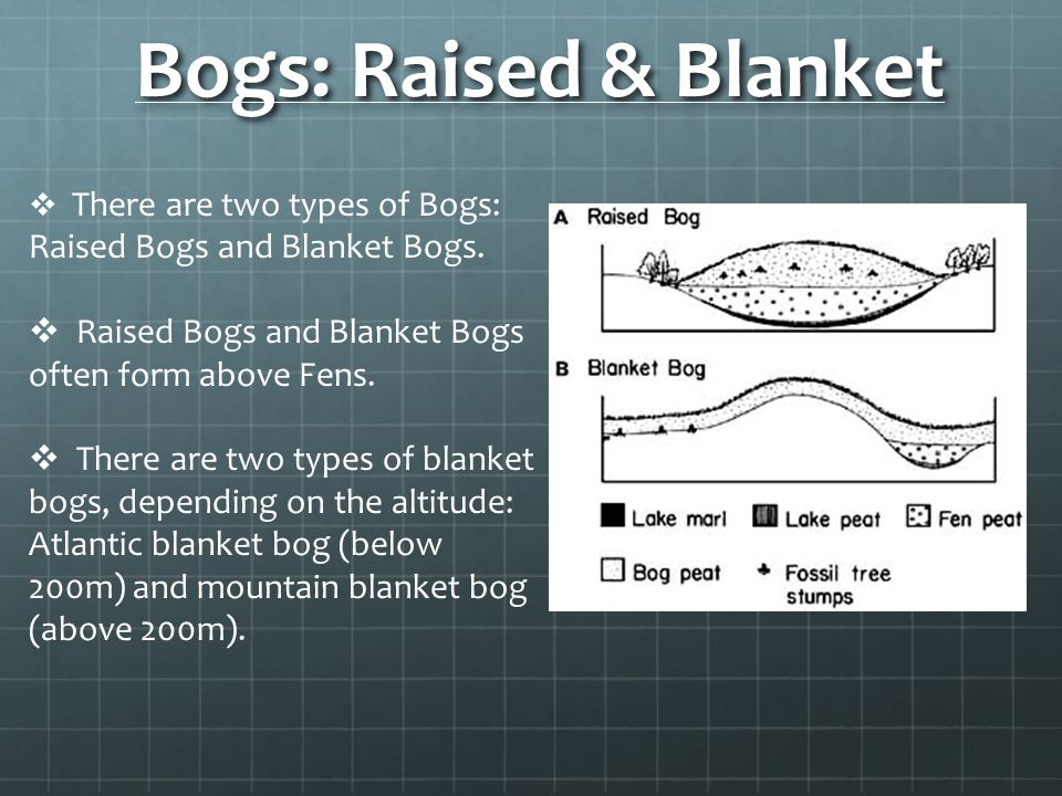Bogs: Raised & Blanket There are two types of Bogs: Raised Bogs and Blanket Bogs. Raised Bogs and Blanket Bogs often form above Fens.