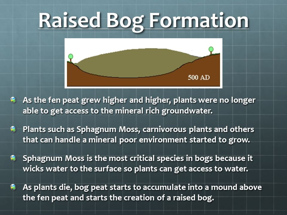 Raised Bog Formation As the fen peat grew higher and higher, plants were no longer able to get access to the mineral rich groundwater.